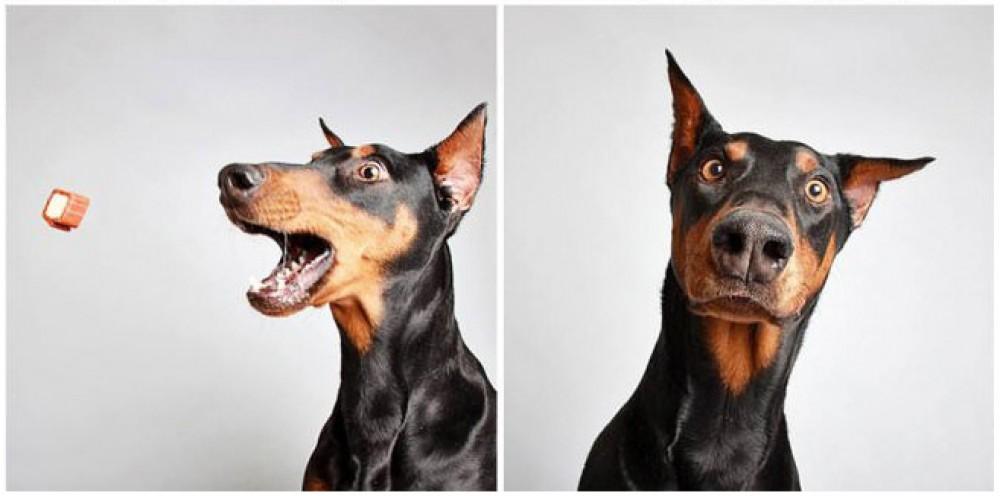 Une animalerie fait adopter des chiens en les mettant dans… un photomaton!